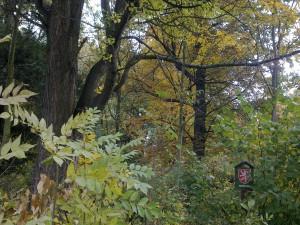 zámek - památný strom