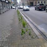 V centru Ostravy vznikají extenzivní záhony