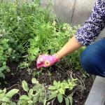 Dubnové okrášlení centra - bylinková zahrádka a guerillové květináče
