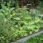 Jedlé záhonky v centru – guerilla gardening v režii okrašlovacího spolku a evropských kápezetek