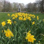 V centru vzniknou nové květinové záhony