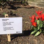 Poetické cedulky s básněmi naděje v centru a v Přívoze a výzva pro veřejnost